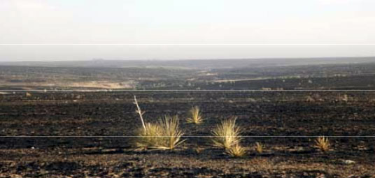 rangeland and pastures burned by wildfires